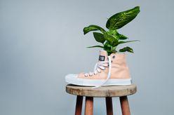 Schuh inklusive Pflanze, die auf das Thema der Nachhaltigkeit aufmerksam machen soll.