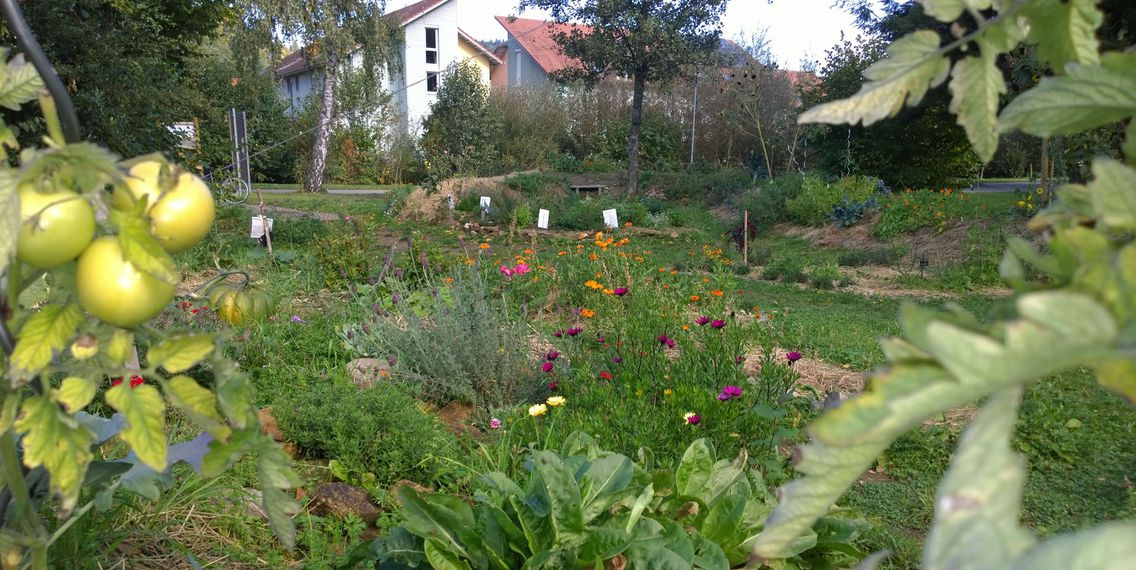 Das Bild zeigt einen Garten vor Häusern.