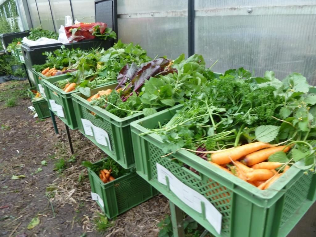 Gefüllte Gemüsekisten direkt nach der Ernte.