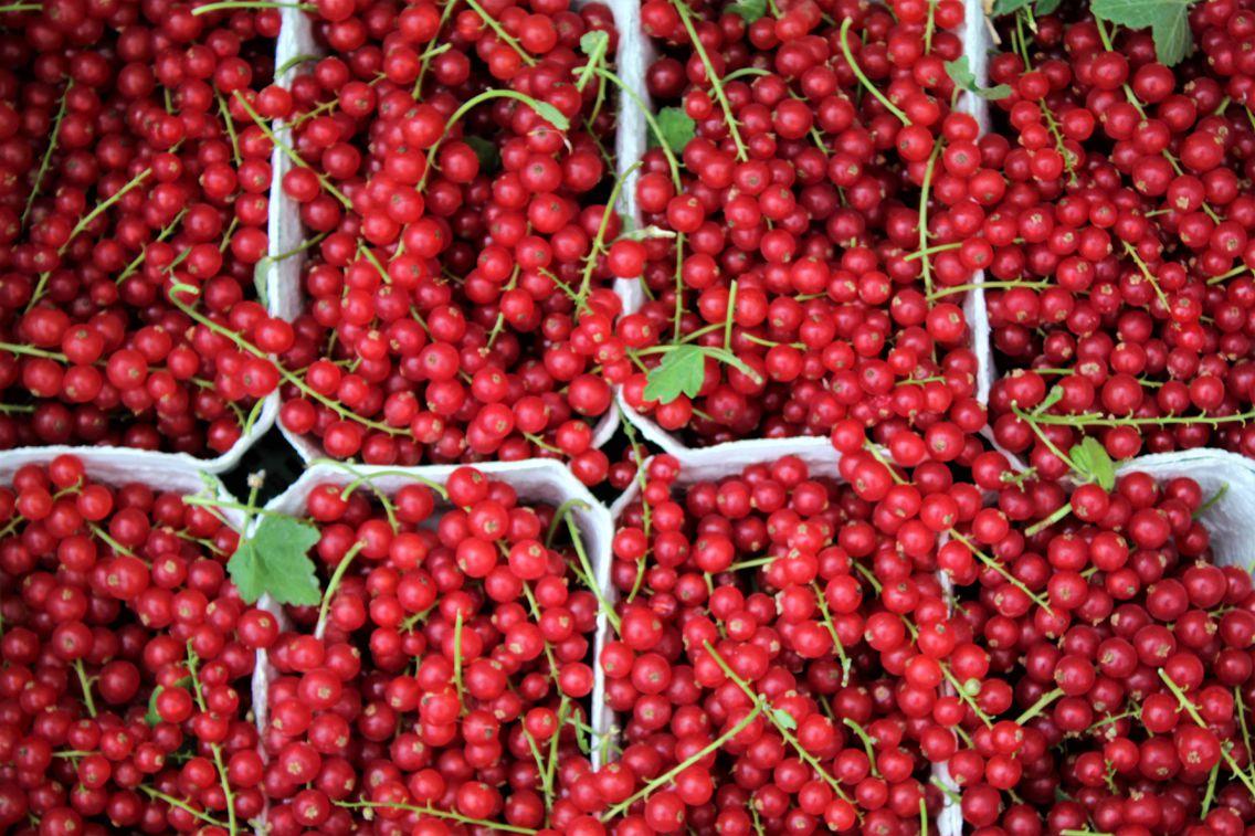 Rote Johannisbeeren in einer Schale
