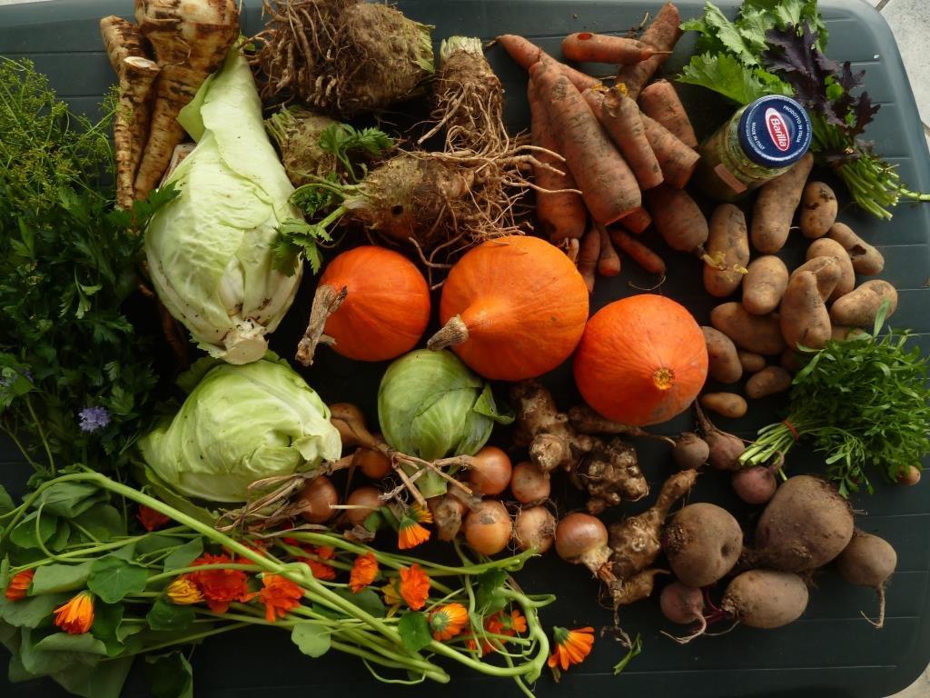 Zu sehen sind einige Gemüsesorten, die Teil der Gemüsekiste im Winter sind. Der Inhalt kann aufgrund der sich ändernden Erntezeiten variieren.